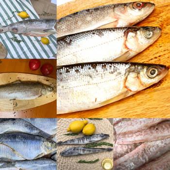 Купить рыбу свежемороженую